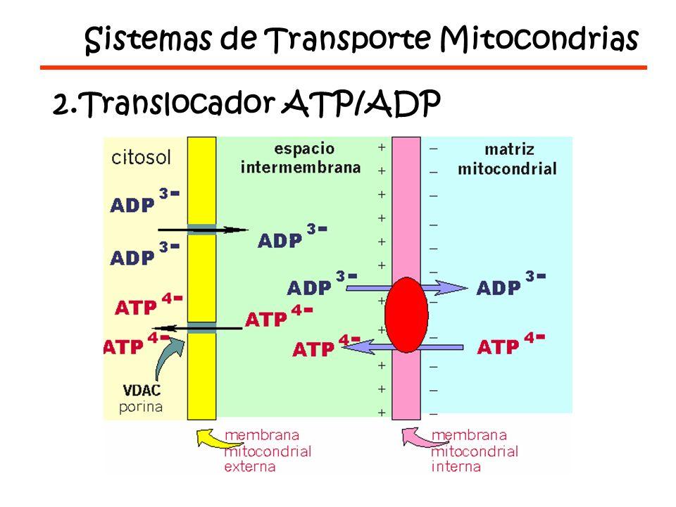 Sistemas de Transporte Mitocondrias