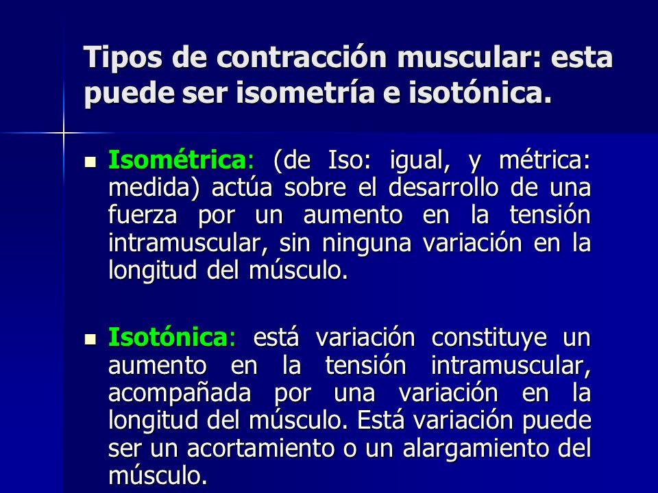 Tipos de contracción muscular: esta puede ser isometría e isotónica.
