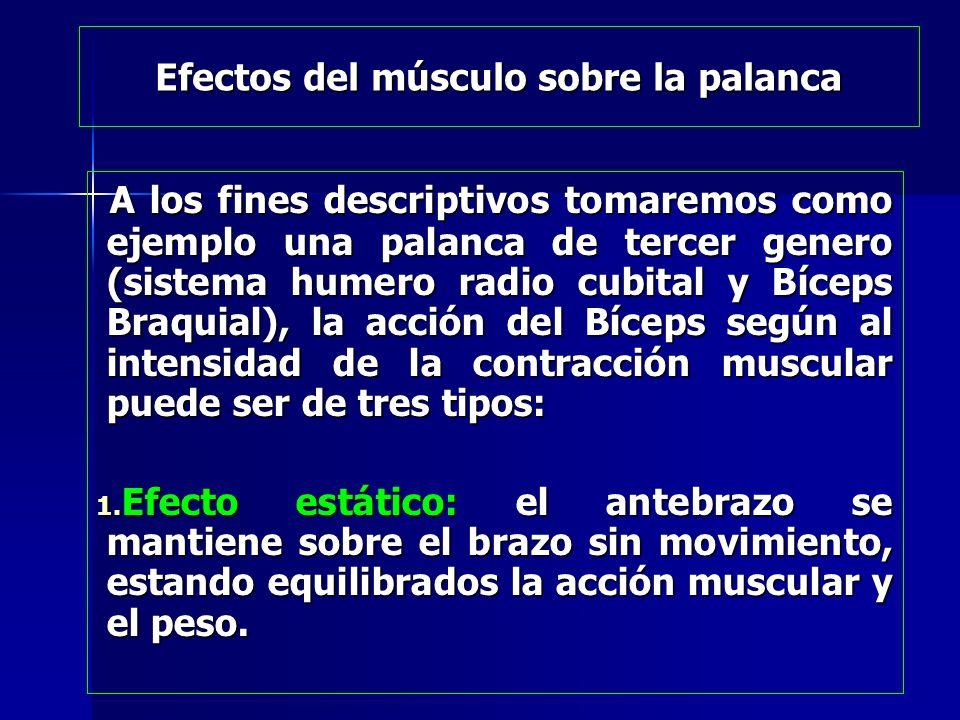 Efectos del músculo sobre la palanca
