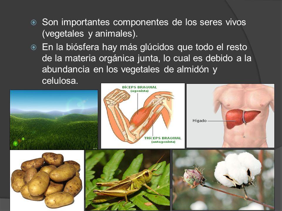 Son importantes componentes de los seres vivos (vegetales y animales).