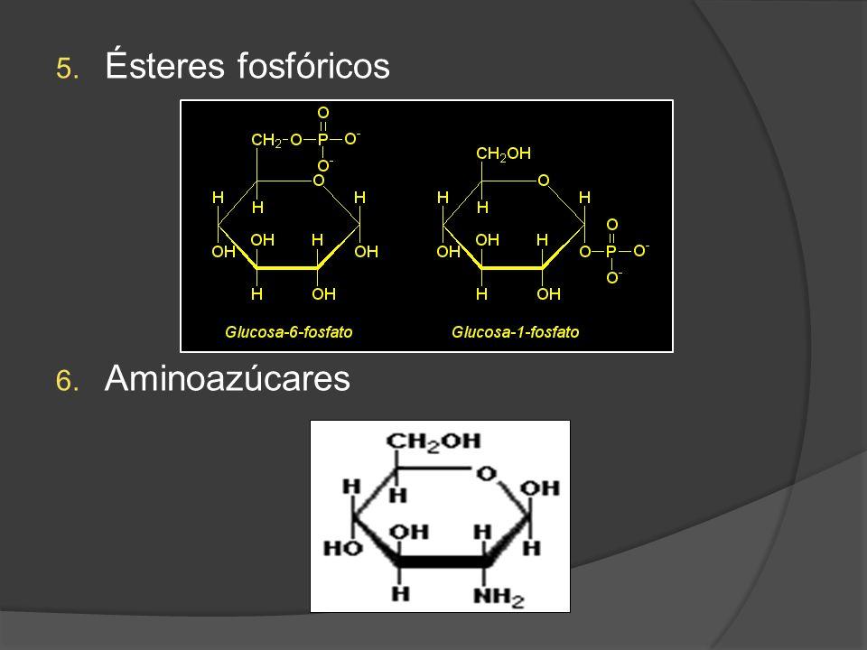 Ésteres fosfóricos Aminoazúcares