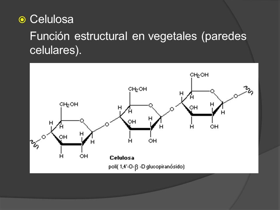 Celulosa Función estructural en vegetales (paredes celulares).