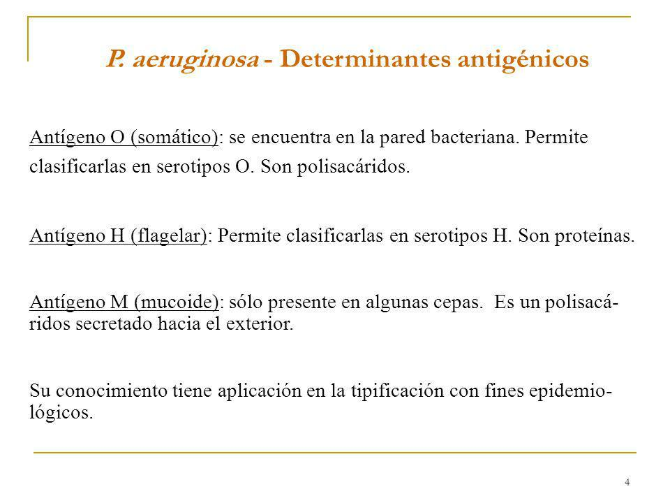 P. aeruginosa - Determinantes antigénicos