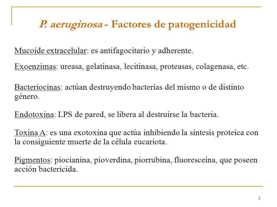 P. aeruginosa - Factores de patogenicidad