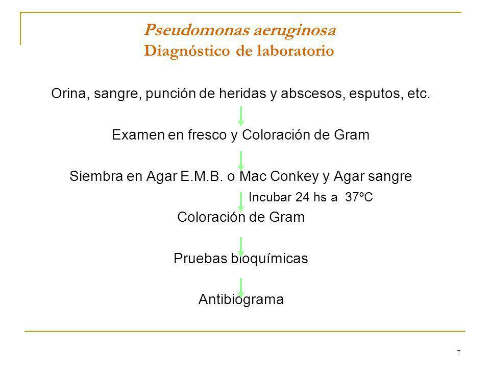 Pseudomonas aeruginosa Diagnóstico de laboratorio