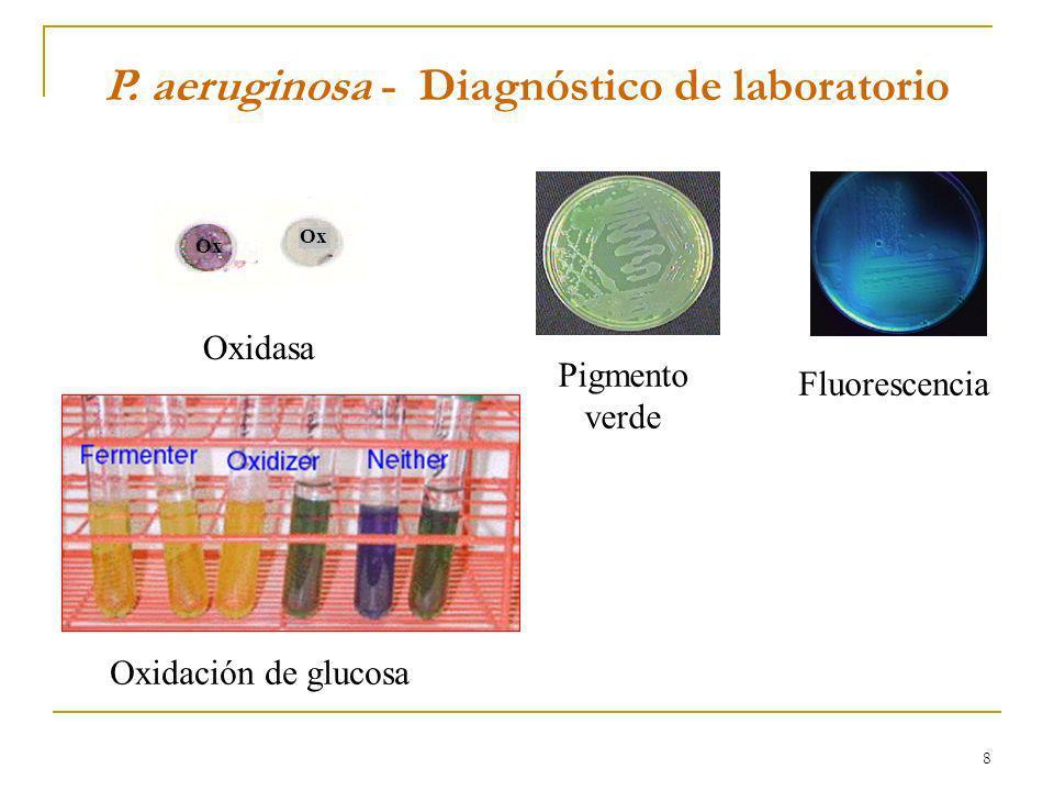 P. aeruginosa - Diagnóstico de laboratorio