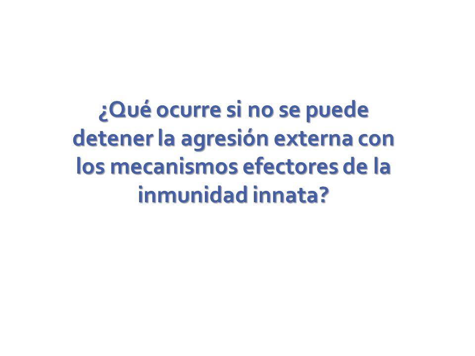 ¿Qué ocurre si no se puede detener la agresión externa con los mecanismos efectores de la inmunidad innata