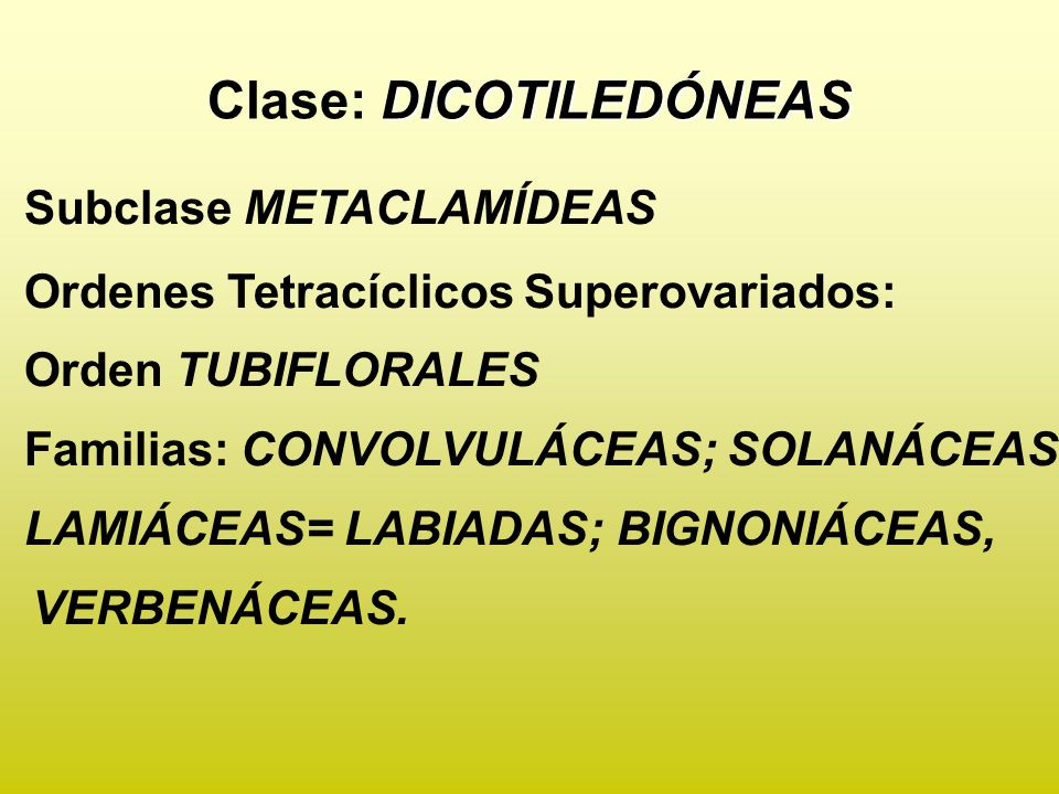 Clase: DICOTILEDÓNEAS