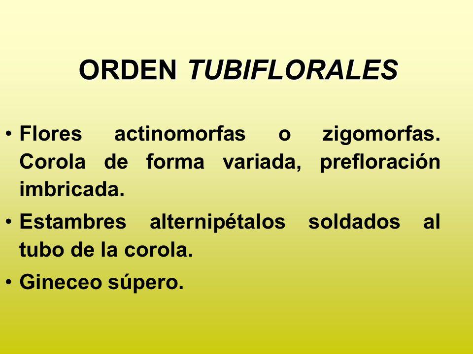 ORDEN TUBIFLORALES Flores actinomorfas o zigomorfas. Corola de forma variada, prefloración imbricada.