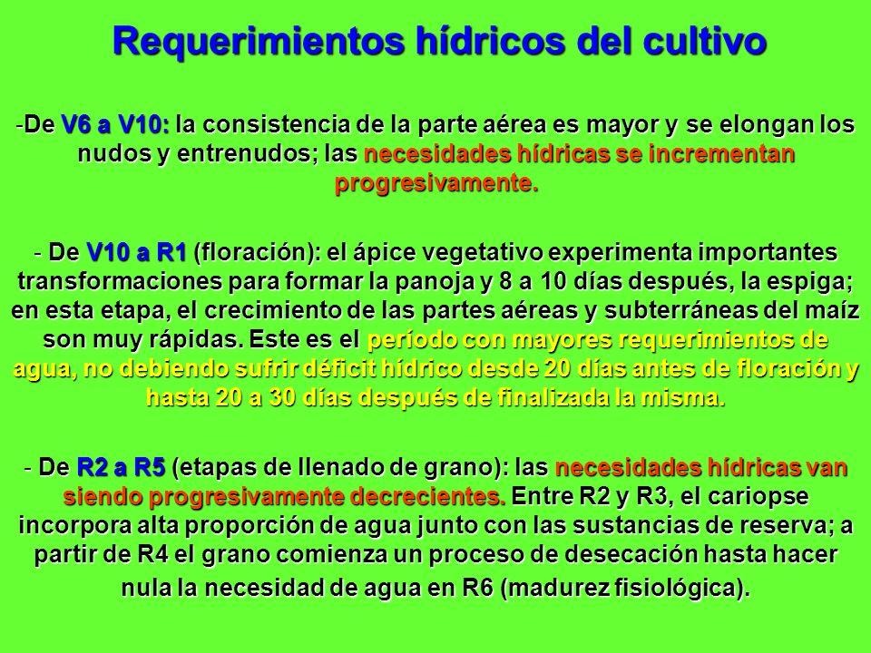 Requerimientos hídricos del cultivo