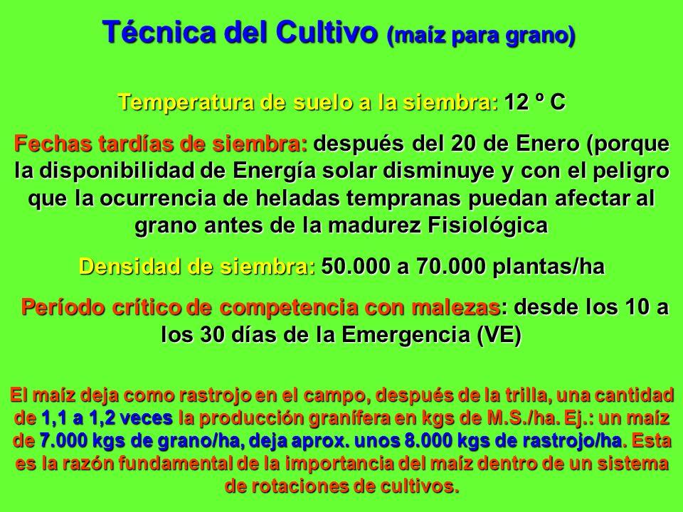 Temperatura de suelo a la siembra: 12 º C