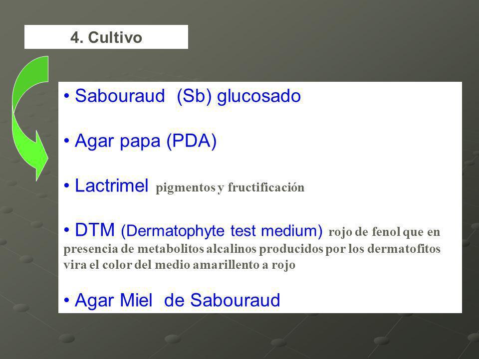 Sabouraud (Sb) glucosado Agar papa (PDA)