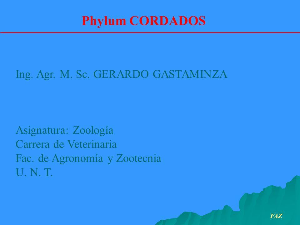 Phylum CORDADOS Ing. Agr. M. Sc. GERARDO GASTAMINZA