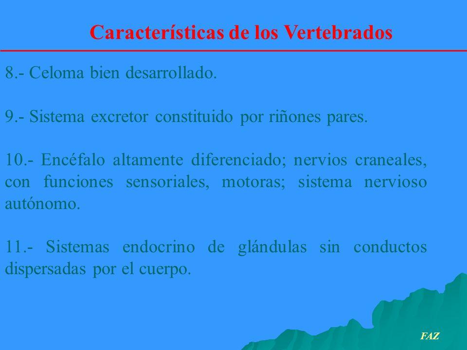 Características de los Vertebrados