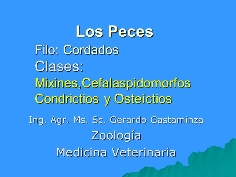 Ing. Agr. Ms. Sc. Gerardo Gastaminza Zoología Medicina Veterinaria