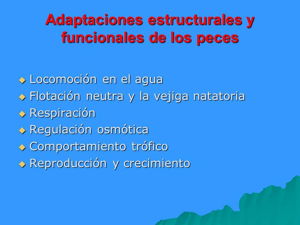 Adaptaciones estructurales y funcionales de los peces