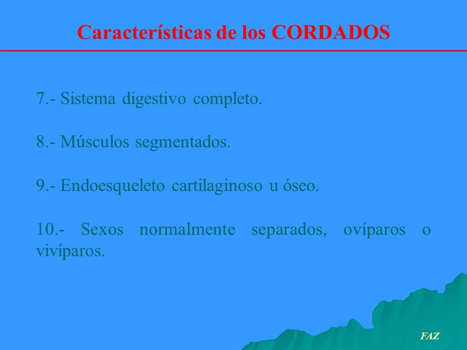 Características de los CORDADOS