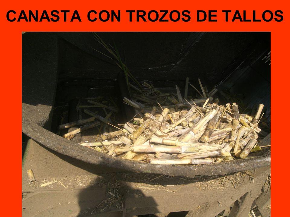 CANASTA CON TROZOS DE TALLOS
