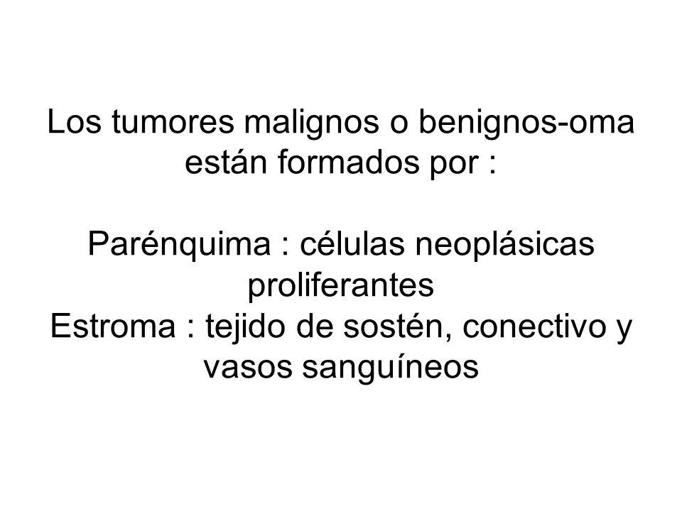 Los tumores malignos o benignos-oma están formados por : Parénquima : células neoplásicas proliferantes Estroma : tejido de sostén, conectivo y vasos sanguíneos