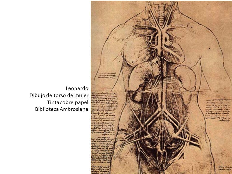 Leonardo Dibujo de torso de mujer. Tinta sobre papel. Biblioteca Ambrosiana.