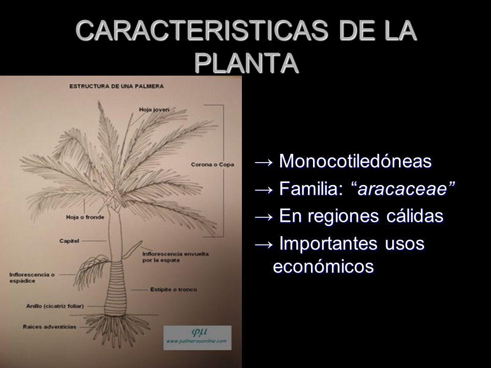 CARACTERISTICAS DE LA PLANTA