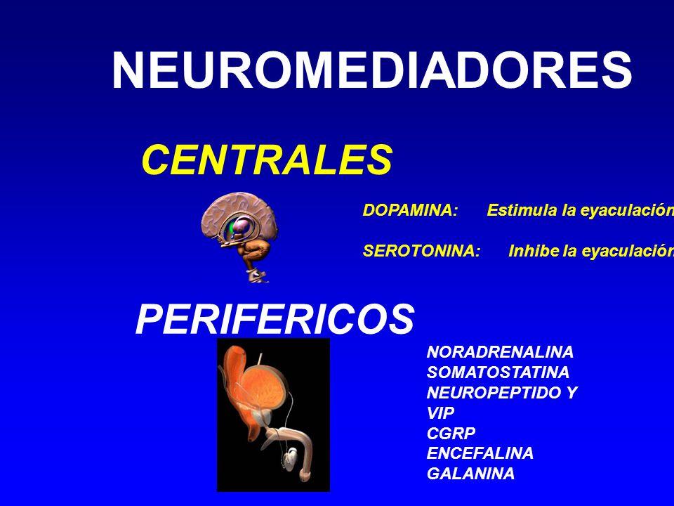NEUROMEDIADORES CENTRALES PERIFERICOS