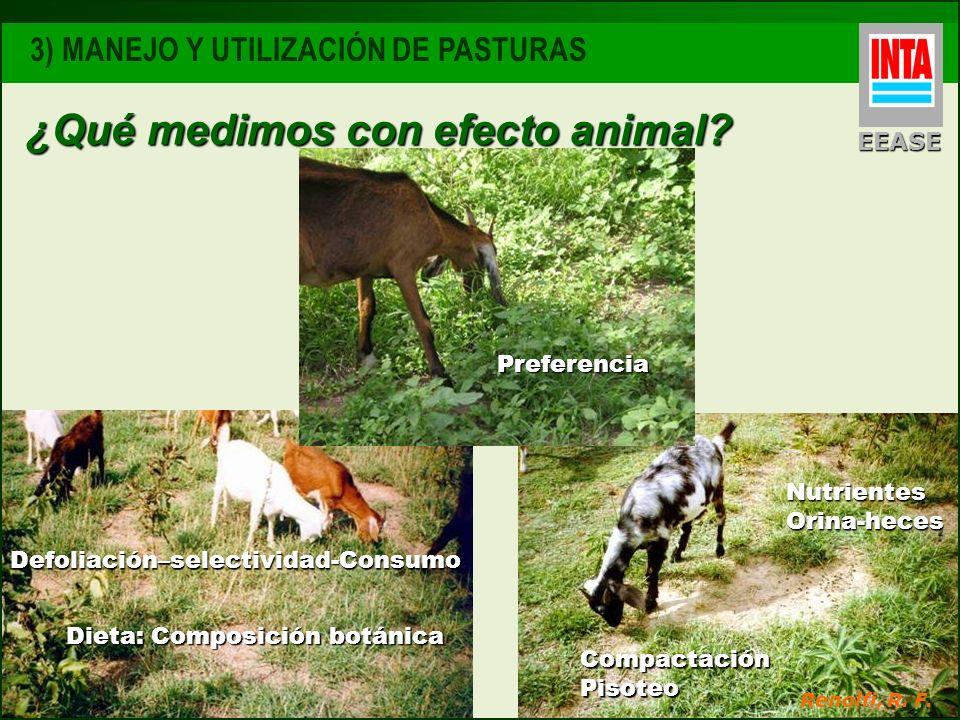 ¿Qué medimos con efecto animal