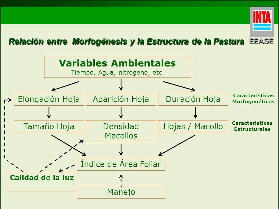 Características Morfogenéticas Características Estructurales