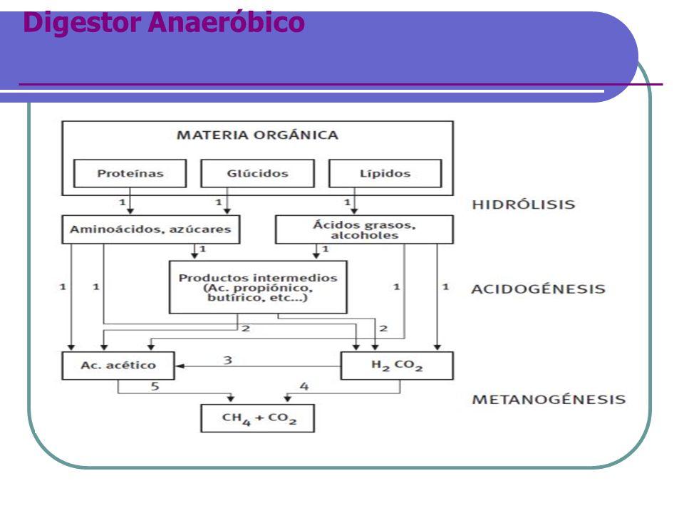 Digestor Anaeróbico
