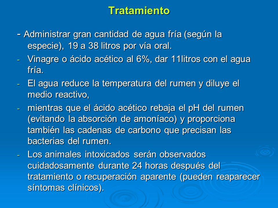 Tratamiento - Administrar gran cantidad de agua fría (según la especie), 19 a 38 litros por vía oral.