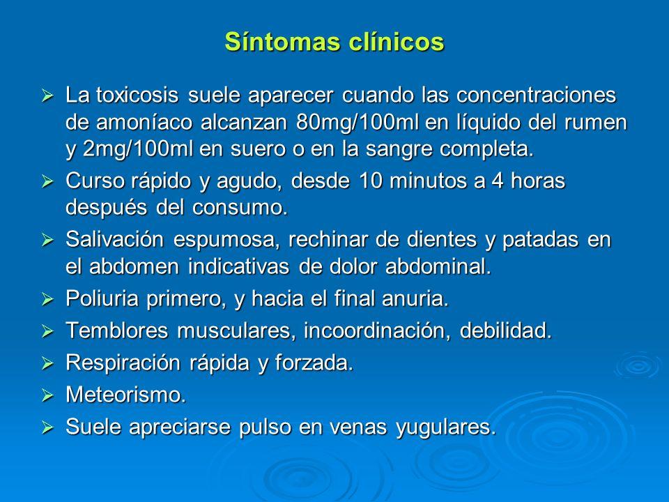Síntomas clínicos