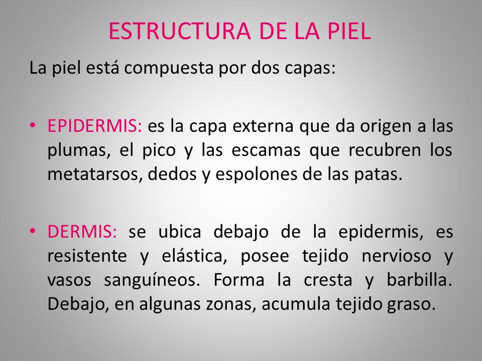 ESTRUCTURA DE LA PIEL La piel está compuesta por dos capas: