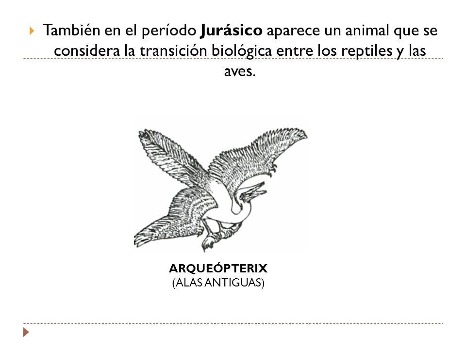 También en el período Jurásico aparece un animal que se considera la transición biológica entre los reptiles y las aves.