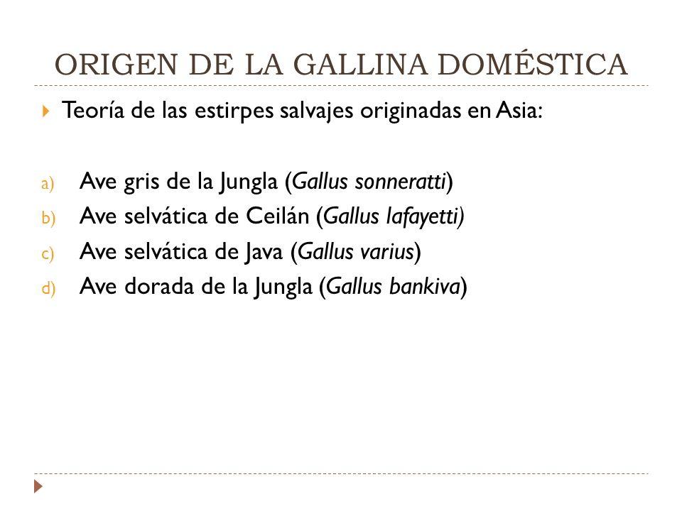 ORIGEN DE LA GALLINA DOMÉSTICA