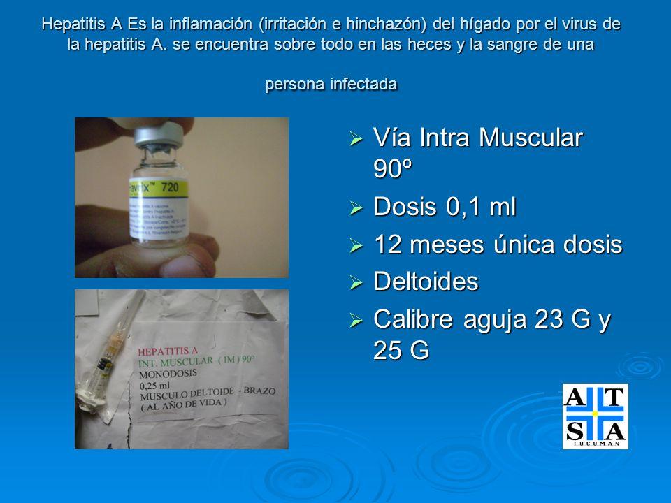 Vía Intra Muscular 90º Dosis 0,1 ml 12 meses única dosis Deltoides