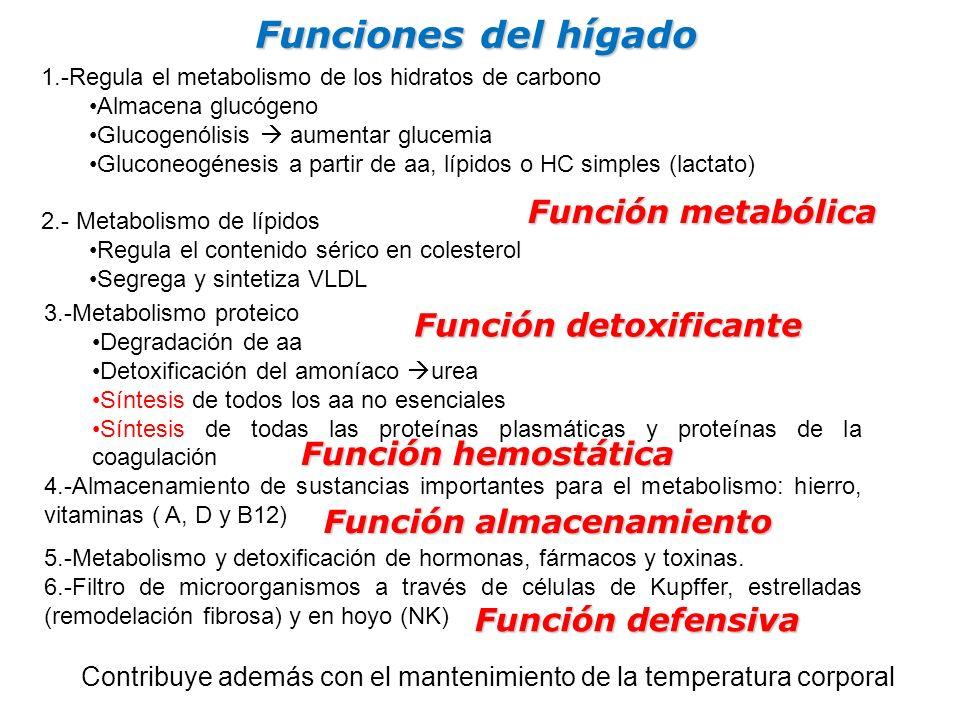 Funciones del hígado Función metabólica Función detoxificante
