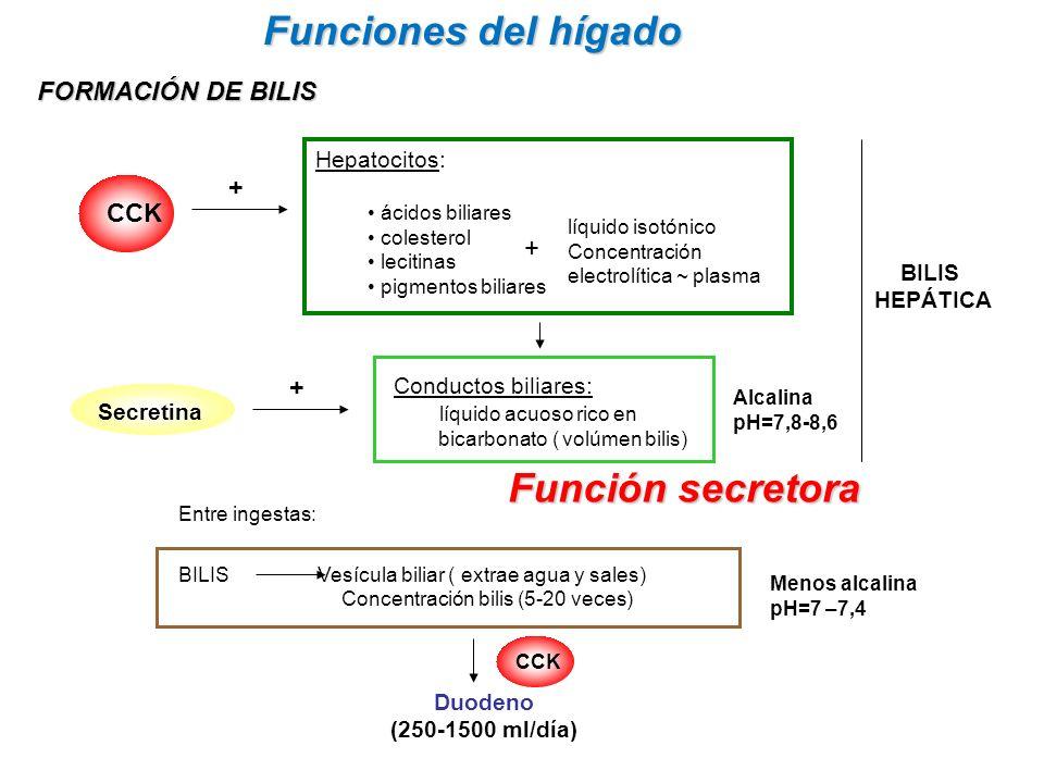 Funciones del hígado Función secretora FORMACIÓN DE BILIS CCK +