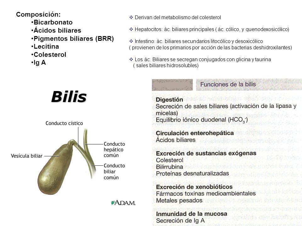 Bilis Composición: Bicarbonato Ácidos biliares