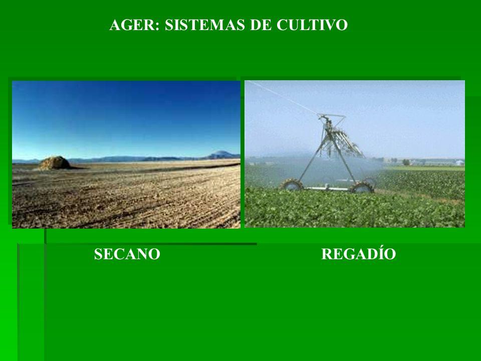 AGER: SISTEMAS DE CULTIVO