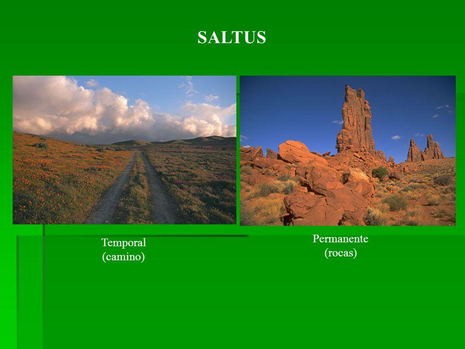SALTUS Permanente (rocas) Temporal (camino)