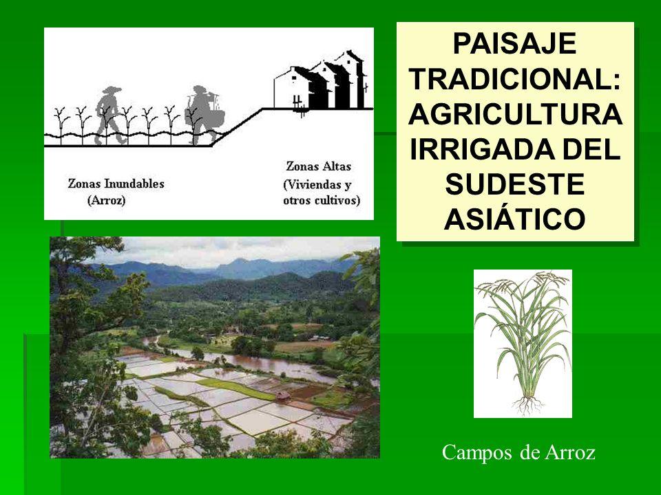 PAISAJE TRADICIONAL: AGRICULTURA IRRIGADA DEL SUDESTE ASIÁTICO