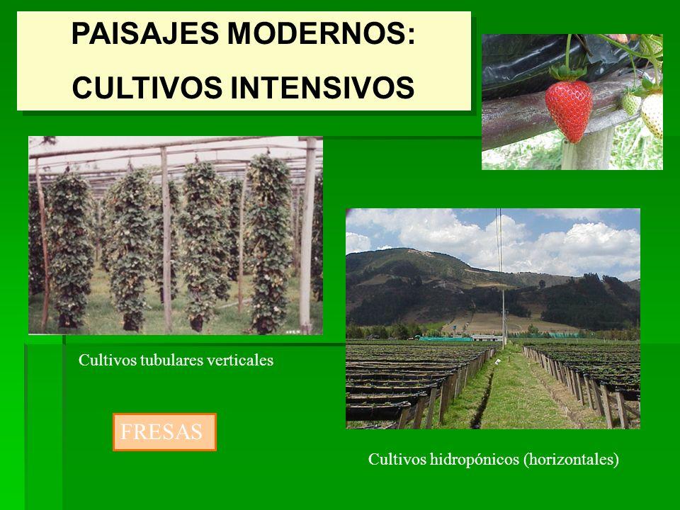 Geograf a rural el espacio rural forma y funci n ppt for Plantaciones verticales