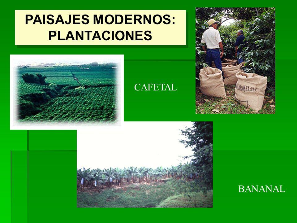 PAISAJES MODERNOS: PLANTACIONES