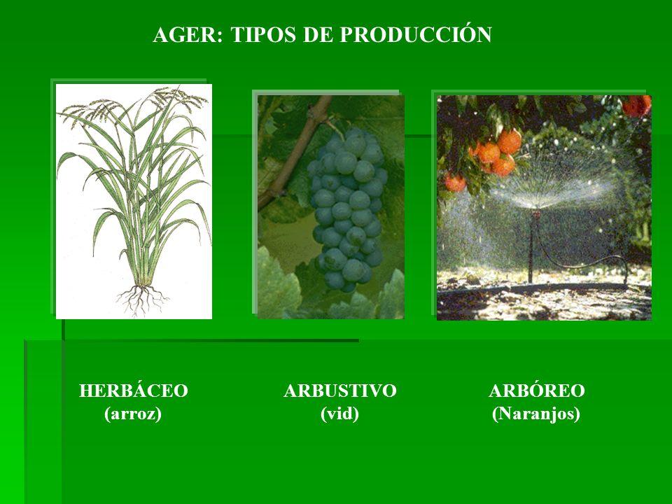 AGER: TIPOS DE PRODUCCIÓN