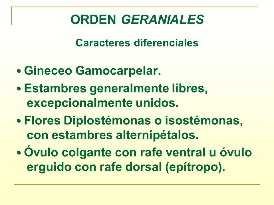 ORDEN GERANIALES Caracteres diferenciales