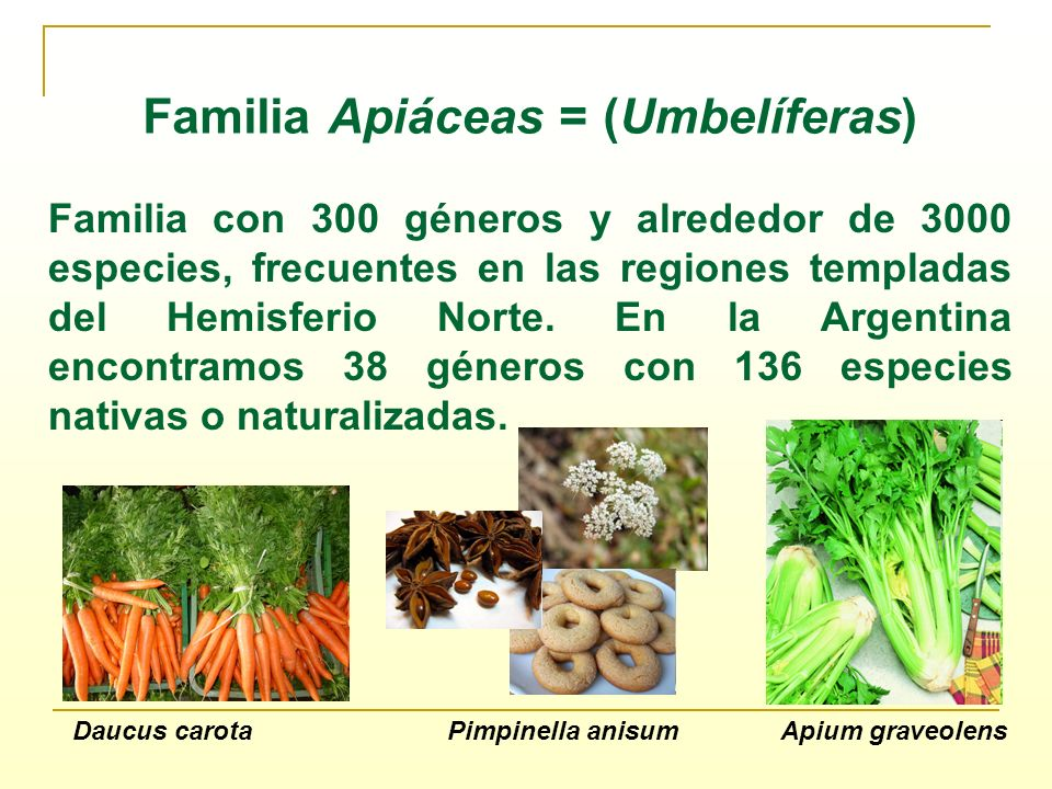 Familia Apiáceas = (Umbelíferas)