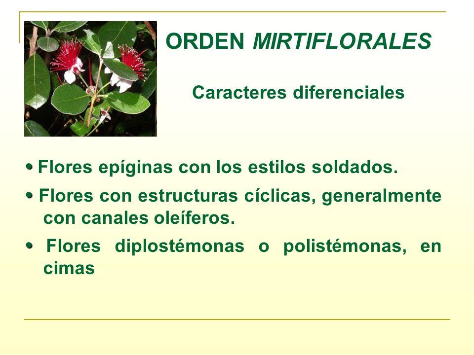 ORDEN MIRTIFLORALES Caracteres diferenciales