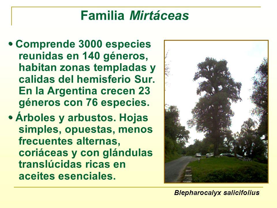 Familia Mirtáceas