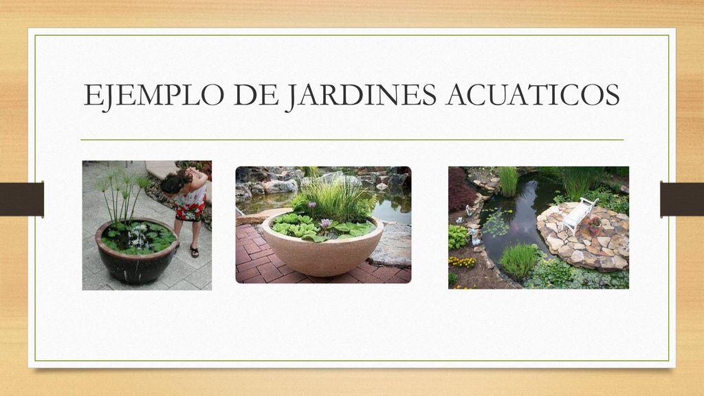 Jardin acuatico ppt descargar for Ejemplos de jardines