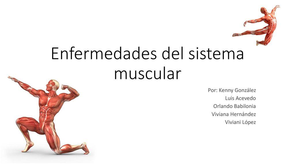 Enfermedades del sistema muscular - ppt video online descargar